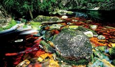 Scenes from Tasmania's Gordon River Tributary, the site of perhaps Australia's most famous eco-action in the led by Bob Brown. Cool Countries, Countries Of The World, May I, Tasmania, Things To Do, Places To Visit, Coast, Around The Worlds, Australia