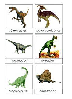 6 illustrations et noms de dinosaures sont affichés sur un mur éloigné de l'endroit où les élèves travaillent: dans le coin regroupement, dans le couloir ou même à l'extérieur. Les élèves doivent aller voir le lexique à distance (sans emporter d'étiquettes-mots...