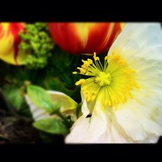 Spring smells Poppy! Gorgeous spring bouquets and flowers!