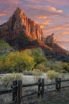 ✯ Zion National Park..had pics of all of this myself...until some jerk stole my camera and film.