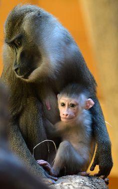 27 mamás y bebés que alegran la vida en los zoológicos alrededor del mundo