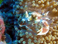 Scuba Diving in Romblon (Philippines) | Flickr - Photo Sharing!