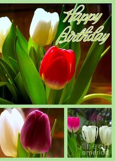 Rainbow Tulips Birthday Greeting Greeting Card by Joan-Violet Stretch