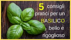 Basil is one of those ingredients that you have to add with your heart, much like garlic. There's just something magical about that burst of basil you get, it makes our taste buds go wild! Pesto Grilled Shrimp, Garlic Basil Chicken, Tomato Butter Sauce, Fruit Plus, Goat Cheese Pizza, Tomato Basil Pasta, Healthy Salmon Recipes, Vegan Recipes, Just A Pinch