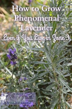 Indoor Vegetable Gardening, Gardening Zones, Organic Gardening Tips, Hydroponic Gardening, Hydroponics, Container Gardening, Herb Gardening, Herbs Garden, Gardening Vegetables