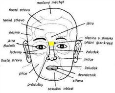 Diagnostická zóna jater a žlučníku se nachází mezi obočím nad kořenem nosu Medicine Book, Health And Beauty, Health Fitness, Healthy, Akupresurní Body, Sport, Forks, Plants, Medicine