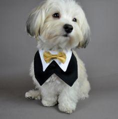 Dog tuxedo with gold bowtie Dog Tuxedo, Tuxedo Vest, Black Tuxedo, Gold Bow Tie, Dog Wedding, Wedding Week, Wedding 2015, Dream Wedding, Wedding Dress