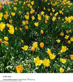Spring fever: She spotted these flowers while she was out on Sunday and shared the image...