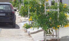 Estamos cientes dos benefícios que as árvores trazem para nossas vidas, seja nos proporcionando ar puro ou simplesmente uma boa sombra para descansar.Por isso, qualquer iniciativa que pretende aumentar o número de árvores dentro dos espaços urbanos deve ser celebrada. É o caso do que está acontecendo em Campina Grande, na Paraíba, que te…