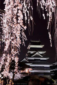 松本城、松本市、長野県、日本。 Matsumoto Castle, Matsumoto city, Nagano prefecture, Japan. Evening Cherry Blossom Festival (夜桜会).