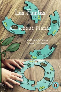 Las Plantas. Plant Life Cycle