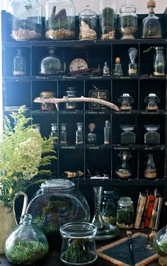 to make your own green terrarium to keep or give away for the holidays. What a beautiful use of bell jars, terrariums and an old mail sorting shelf! This is using vintage antiques in a modern way at its best! Via The Slug and The SquirrelWhat a beautifu Deco Cafe, Theme Nature, The Bell Jar, Bell Jars, Cabinet Of Curiosities, Witch Aesthetic, Witch House, Diy Décoration, Interior Exterior