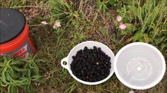 Sustainable Farming sold'em faster then I could pick'em blackberries