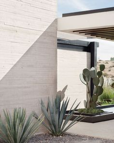 Easy Desert Landscaping Tips That Will Help You Design A Beautiful Yard Indoor Cactus Plants, Indoor Flowers, Cacti, Landscape Architecture, Landscape Design, Garden Design, Desert Landscape, Indoor Gardening Supplies, Belle Plante