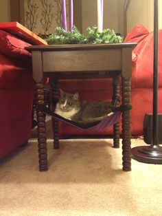 Here is Gracie out in Denver sitting in her Cat Crib.