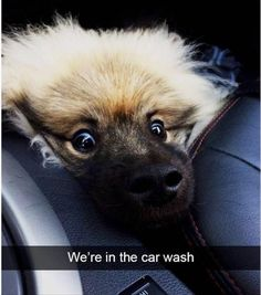 15+ Funny Animal Photos for an Awesome Saturday