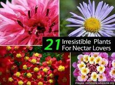 Nectar flowers