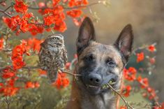 This Dog is Best Friends With Owls