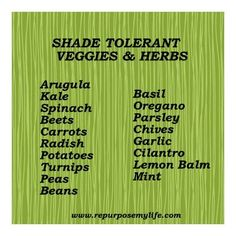 shade herbs - Google Search