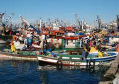 pUertos artesanales de Chile - Talcahuano