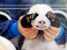 cutest peek-a-boo EVER