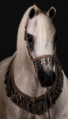 ✫ A Beautiful Arabian.