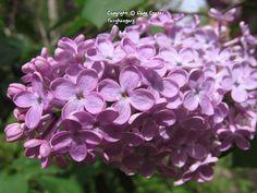 Fairyhungary: Orgonák Plants, Plant, Planets