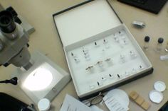 My insect collection Insect Orders, Dad Birthday, Conservation, Insects, Collection, Canning