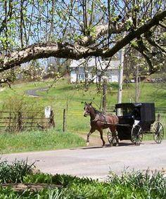 Amish country  #Inspiration Book 1 of the Clover Ridge Series Saving Gideon by Amy Lillard Amish Romance http://www.amywritesromance.com
