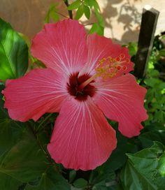 Otro clavelon jardín =vida