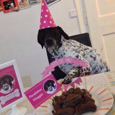 Maggie #pupcake #dogbakery #petbakery #boloparacão #barkday #pawty www.ninamaria.pt