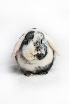 I had the same bunny .His name was Smigus.