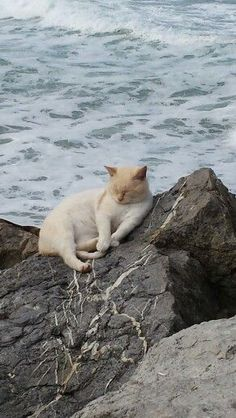 Cat on the rocks. <-- This picture is cute but I'm concerned for the cat. Like, why is it so chill about the ocean being RIGHT there?!