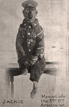 Wacko But True: The Baboon Who Served in His name was Jackie, and he was a member of the South African Infantry (Transvaal) Regiment which fought alongside the British Army in World War One, First World, Battle Of Passchendaele, Different Types Of Animals, Man Of War, Today In History, Wild Creatures, Baboon, Wwi
