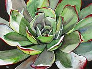 Succulent Watercolor Paintings -
