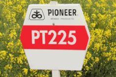 hibrid rapita PT-225