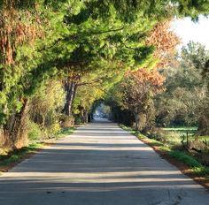 #beautiful #feeling this #morning ! #goodmorning from #colourful #lefkada ! . #goodday #lefkadaisland #visitlefkada #visitGreece #naturalarch #nature #trees #colourfultrees
