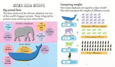 Junior Library Guild : Animal Infographics by Chris Oxlade