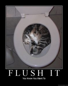 Wrong place for a nap! (Would you flush?)