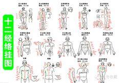 """只需3分鐘就能背下來黃帝內經(圖) 《黃帝內經》是中國傳統醫學四大經典著作之一(《黃帝內經》、《難經》、《傷寒雜病論》、《神農本草經》),是我國醫學寶庫中現存成書最早的一部醫學典籍。在理論上建立了中醫學上的""""陰陽五行學說""""、""""脈象學..., 黃帝內經"""