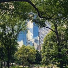 Glass and trees #nyc #photo #iphone6 #photosafari #alexvakulin #photography #nyip #pictures #digitalimages  #city #prophoto #pophoto #shuterbug #canonphoto #canon #camerapro #images #photochase #neverstopphoto #jpg #vsco #vscocam #perfectphoto #photooftheday #all_shots #procamapp #photoeverything