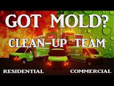 Mold Remediation Cleaning Services