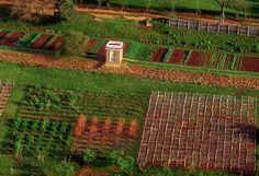 Monticello, Virginia - Mulberry Row, Vegetable Garden Terrace, and South Orchard Garden Plants Vegetable, Fruit Garden, Edible Garden, Monticello Thomas Jefferson, Monticello Virginia, Charlottesville Va, Colonial Garden, Garden Design Plans, Fall Vegetables