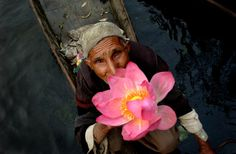 EDITOR'S PIC OF THE DAY Photo: AMI VITALE Kashmir, India: A Kashmiri vegetable seller holds a Kashmiri Lotus flower at the early morning market in Dal Lake in Srinagar.