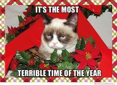 65 Ideas Funny Christmas Greetings Hilarious Grumpy Cat For 2019 Angry Cat Memes, Grumpy Cat Meme, Grumpy Cat Quotes, Grumpy Kitty, Cat Jokes, Grumpy Cat Christmas, Christmas Humor, Merry Christmas, Xmas