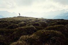 Alpen: Pfitscher Joch