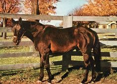 The amazing War Admiral.A rare color photo of Seabiscuit's arch rival.