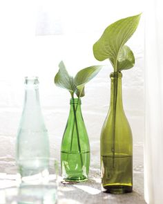 Reuse Glass Bottles