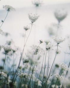 vintage-fawn:  englishsnow:  { summer }  I'll be the beauty queen in tears.