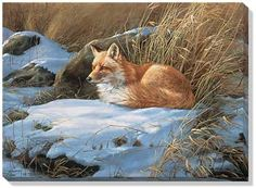 F593865472:Fox Wrapped Canvas by Rosemary Millette